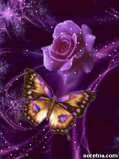 Photo of write your lover name on beautiful butterfly