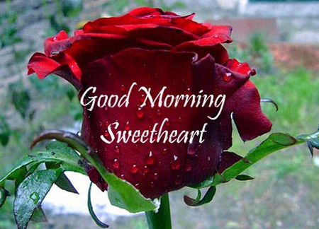 Photo of write on image good morning sweetheart