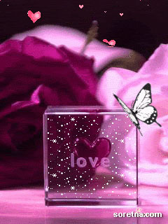 Photo of write your names on love butterfly gif photo