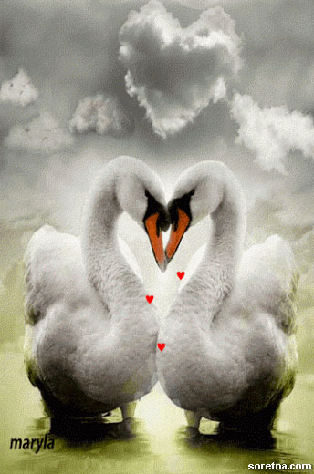 Photo of write your names on swan lovers gif photo