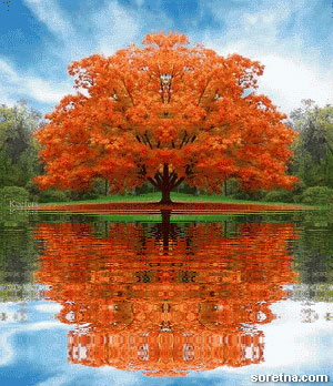 Photo of write your name on tree reflection on water gif photo