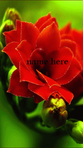Photo of write name on romantic red flower
