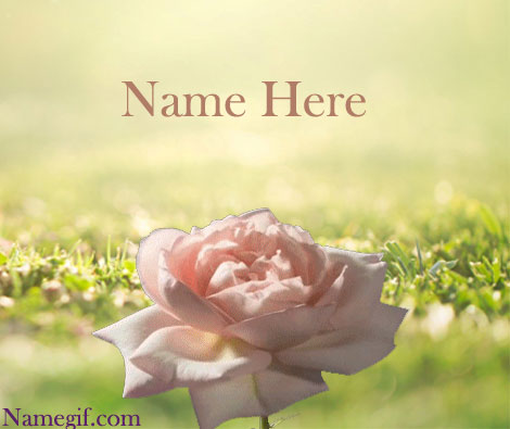 Photo of write name on gif opening rose write on gif