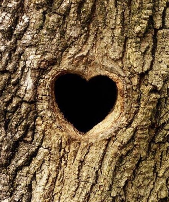 Photo of Heart Tree with Your Name