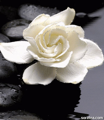 Photo of write your name on white flower